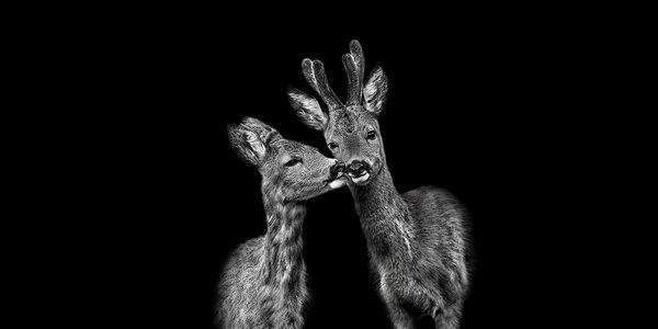 Fotoausstellung von Claudio Gotsch